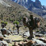 Mt Kenya 3